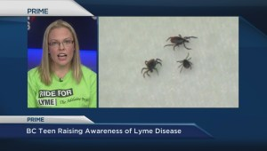 Raising awareness of Lyme disease