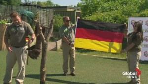 Bob the sloth picks Germany in World Cup final