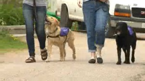 Advocates are calling for official government ID for Service Dogs.