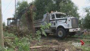 City rushes to rescue dozens of trees from Arbutus Corridor