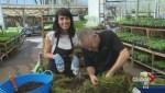 Gardening: Berry Baskets