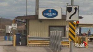 Maple Lodge Farms launches probe after 'disturbing' allegations of animal cruelty
