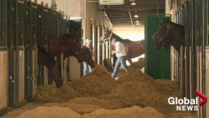 Calgary Stampede to review safety after four horse deaths