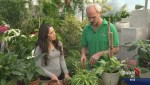 Gardening: Fresh start for 2017