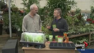 Gardening: Growing micro greens