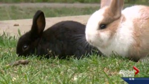 Springtime is for bunnies and baby animals