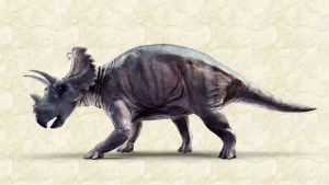 New horned dinosaur discovered in Alberta