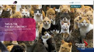 Clever 'Katz District' website