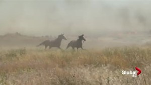 Horses flee fire near Ashcroft
