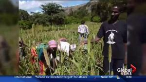 Helping rural African communities become self-sufficient with food