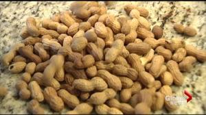 New research suggests peanut allergies can be avoided