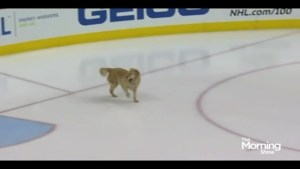 The NHL is going to the dogs