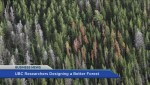 BIV: UBC researchers design a better forest