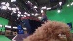 The World According to Storm the Weather Dog