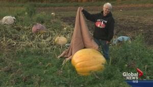 Smoky Lake pumpkin fair