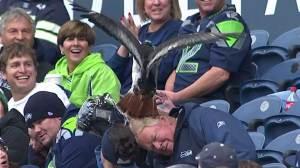 Seahawks mascot swoops down, lands on fan