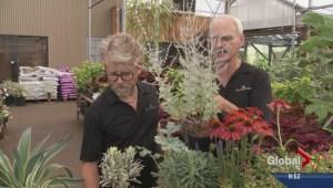 Gardenworks: Drought-resistant perennials
