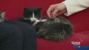 Four kittens visit Global Calgary