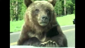 Montana family gets face to face with a grizzly bear