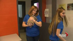 The Ontario SPCA will be highlighting volunteers from across the province