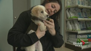 Oakville rescue helps puppy with special needs that was thrown in the garbage
