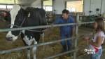 Southern Alberta dairy farm opens barn doors to the public