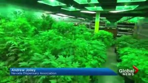 Las Vegas set to become biggest pot market after Nevada legalizes marijuana