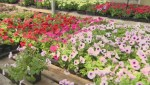 How to add colour to your garden this spring