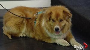Edmonton Humane Society: Kelsey and Moe