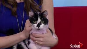 Adopt a Pet: Steve the kitten looking for his new home