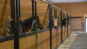 Strangles forces quarantine of horses at Southern Alberta Equine Centre