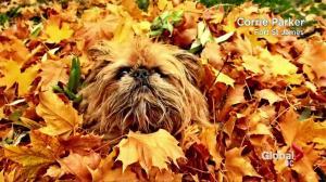 BC Evening Weather Forecast: Oct 5