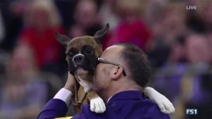 B.C. dog makes it to final seven at Westminster Kennel Club Show