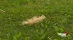 Dead cat found in northwest neighbourhood
