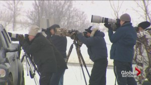 Nova Scotia town one of the most popular destinations for bird watchers