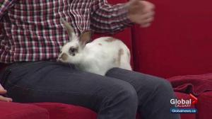 Pet of the Week: Miss Bunny
