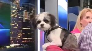 Adopt a Pet: Apollo the Tibetan Terrier Mix