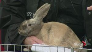 Adopt a Pet: Bunnies