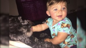 Family dog dies saving eight-month-old baby from fire
