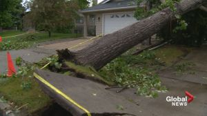 Calgary cleans up after powerful spring storm