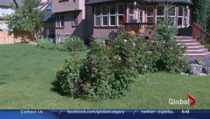 How to keep your garden beautiful in Calgary's climate