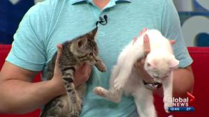 Pet of the Week: Peach and Luigi
