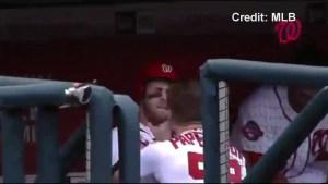 Teammates Bryce Harper, Jonathan Papelbon brawl in dugout