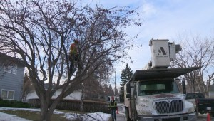 Warm winter aids cleanup effort after summer snowstorm