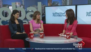 Tale of Gulliver the Cat; Tara Borna, Sandra Henry and Gulliver, MEOW Foundation