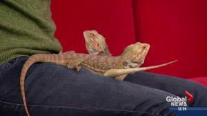 Pet of the Week: Vissy and Pilsner