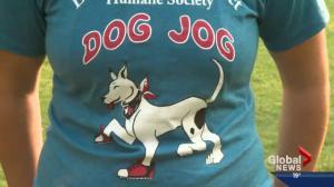 Pet of the Week: Dog Jog