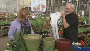 Gardening: Dual Purpose Plants