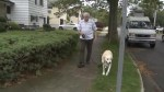 Long Island man pepper sprays neighbour over dog urinating on his lawn