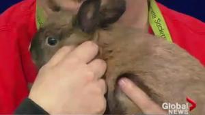 Edmonton Humane Society: Bunny & Rascal